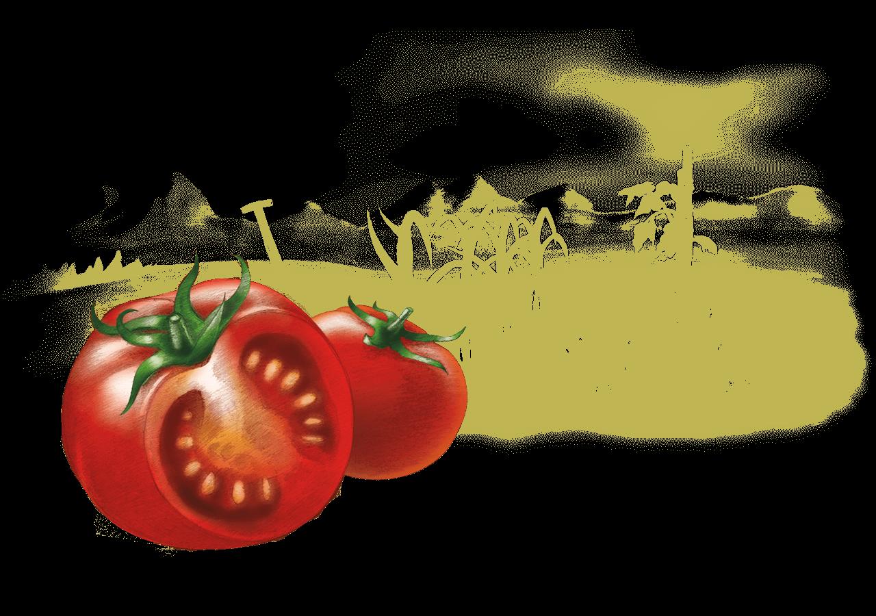 header_1280-tomate